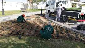 Al Sheehaniya Municipality's Gardens Department planted 586 trees, 353 shrubs and 25,050 summer and