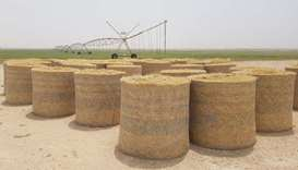 Hassad to invest QR200mn in fodder sector over 3 yrs