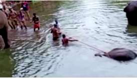 People pull a pregnant elephant out of the water, which died after eating a firecracker-stuffed frui