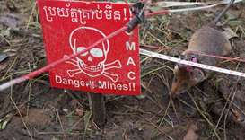 A mine detection rat sniffs for landmines in an area being demined in Preah Vihear province, Cambodi