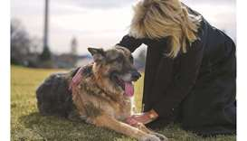 US First Lady Jill Biden pets Champ after his arrival from Delaware at the White House in January