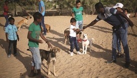 Palestinian Doctor Dolittle cares for Gaza's stray dogs