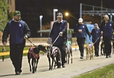 New South Wales bans dog racing for 'systemic cruelty'