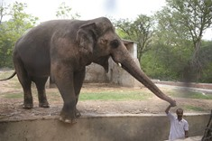 'Lonely' elephant has mental illness: experts