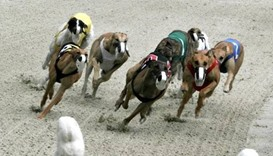 Dog racing banned by Australian state for 'systemic cruelty'