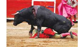 Spain's Balearic Islands ban bull killing in corridas