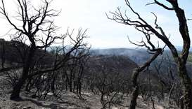 Massive fires 'under control' in southern France