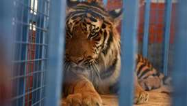 Animals evacuated to Turkey from 'neglected' Syrian zoo