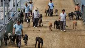 Macau govt adopts abandoned greyhounds as track shuts