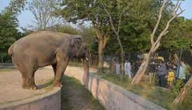 Pakistan to relocate lonely elephant to Cambodia sanctuary