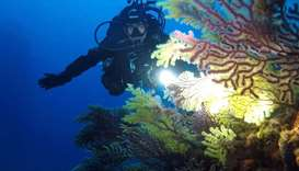 A Coast Guard diver shines light on a forest of gorgonians at Secche di Tor Paterno, a marine reserv
