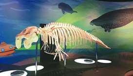 The 'Seagrass Tales, Dugong Trails' exhibition at NMoQ underlines the significant work of scientists