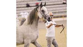 Organised by Al Shaqab and Al Rayyan Farm, the overall auction yielded an excess of 3.5mn in Qatari