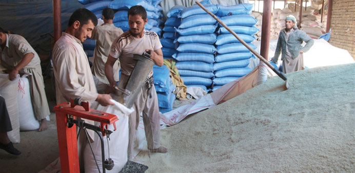 Men fill bags with freshly harvested rice at the rice market in Kunduz where fighting has prevented