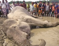 Case seeks damages for death of elephant