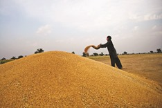 Islamic finance becoming strong support factor for agricultural development