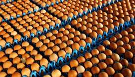 Dutch police make arrests in contaminated eggs case