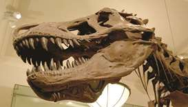 Man fights US authorities over a dinosaur skull