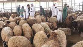 Subsidised sheep to be sold to Qataris from Saturday
