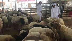 Inspection at Doha Central Market