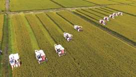 """China's breadbasket faces """"the greatest risk to human life from rising temperatures of any location"""