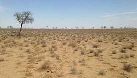 Rain brings relief to drought-stricken Australia farmers
