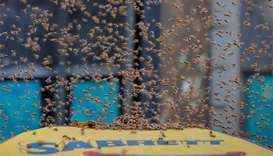 New York hot dog stand swarmed by over 40,000 bees