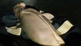 Mariam the dugong lying in a container after she died at the Trang province marine park.