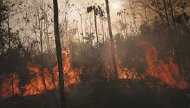 Amazon jungle burns