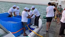 The fish were released in two batches: 21,000 in the first and 30,000 in the second.