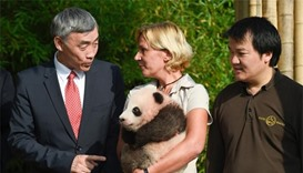 Belgium's first baby panda named 'Treasure of Heaven'