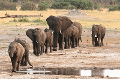 Fate of African elephants at stake at wildlife meeting