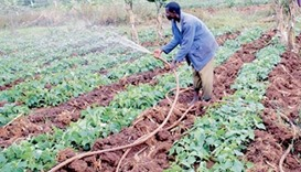Irrigation on rise in Africa as farmers face erratic weather