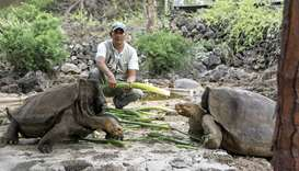 Galapagos National Park shows a park ranger feeding giant tortoises at the park in Santa Cruz
