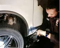 Koala survives 16km drive trapped under Aussie SUV