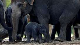 Belgian zoo delighted at Asian elephant's birth