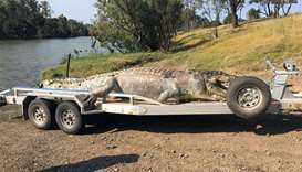 The  5.2-metre male crocodile that was found in a creek along the Fitzroy River near Rockhampton wit