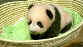 Fragrant name for baby panda unveiled in Tokyo