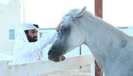 Qataris ride the wave of horse-keeping hobby