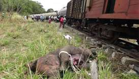 Sri Lanka train kills mother elephant, two calves