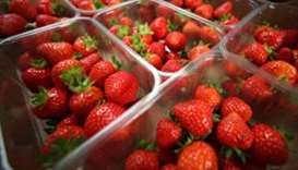 Australia strawberry needle scare: tough penalties proposed