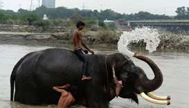 Delhi's last elephants await marching orders