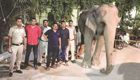 The elephant was found near the Delhi police headquarters on Tuesday.