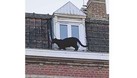 Panther found roaming French rooftops