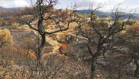 A view shows burnt trees after wildfire in Ain Draham in Jendouba, Tunisia.