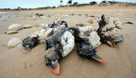 (Representative photo) Extreme weather, pollution and disease can kill seabirds. (AFP)