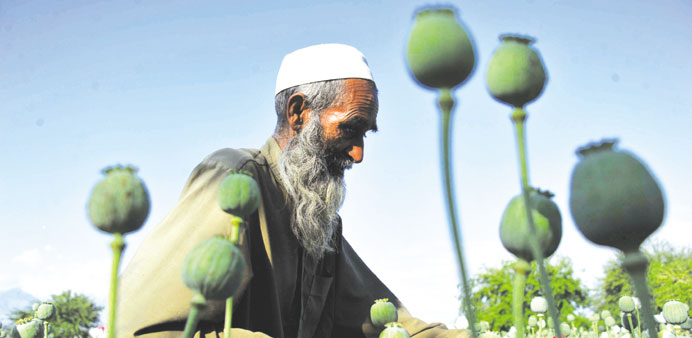 Afghan opium cultivation hits record high in 2013