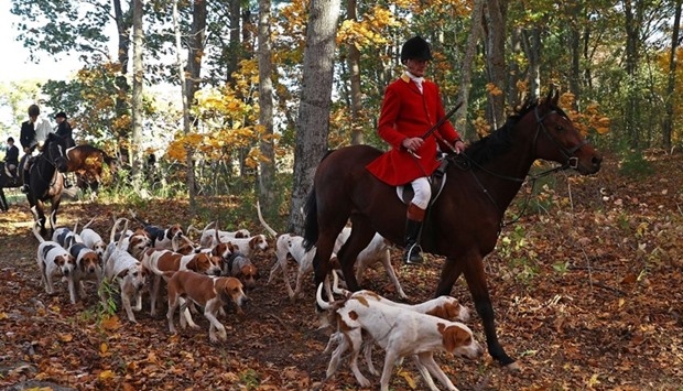 Huntsman Phillip Headdon and his horse George lead the hunt