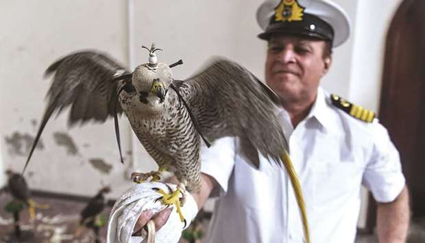 RESCUE:A customs officer holds on his arm a falcon that was recovered from illegal captivity, during