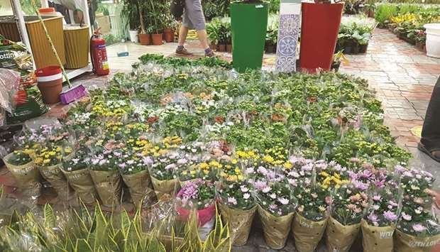 Flowering plants on display at a nursery.